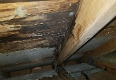 Attic Mold Remediators Near Me