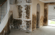 Parkland Mold Removal Experts