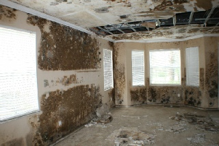 Best Mold Companies cooper city