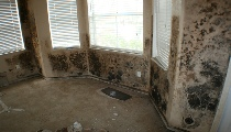 Mold Removal South Palm Beach