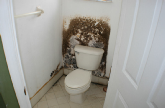 Mold Cleaners and Treatments Hollywood, fl