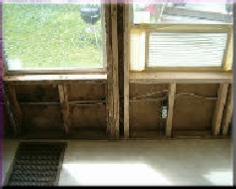 This Mold Damage Was Caused By Window Leaks The Home Owner Noticed A Musty Smell Upon Inspection Checked For Water Intrusion