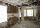 Mold Specialist Hollywood