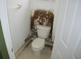 Mold Cleanup Experts Cooper City