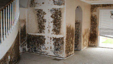 Home About Us Mold Removal Water Damage Services Photo Galleries Contact