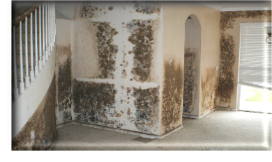 Mold Removal Davie, Fl