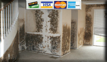 Mold Removal Water Damage Experts